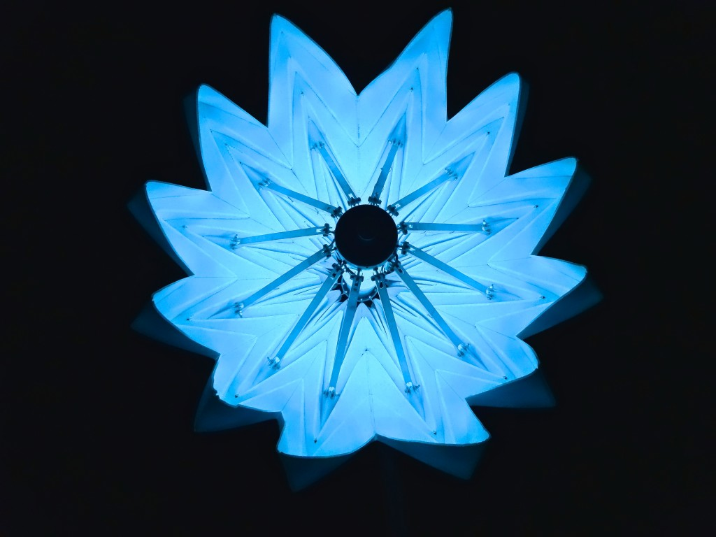 Blooming Flower, Burning Man, 2014, the soul dynamic